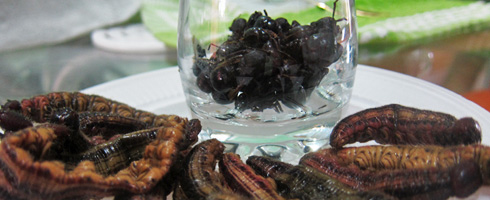 ants-and-grubs-on-my-plate